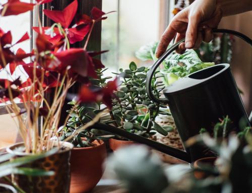 Piante in casa e in giardino: come evitare l'arrivo degli insetti?