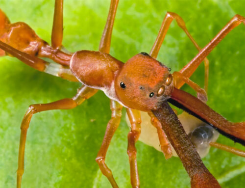 Diventare una formica