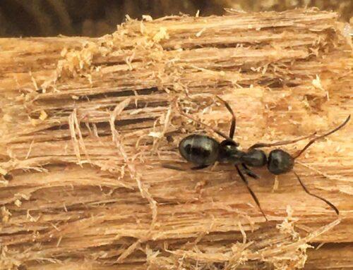 La socialità delle formiche